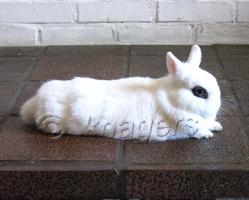 kunnen konijnen gillen