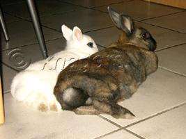 konijnen hoofd armen en benen van teddy